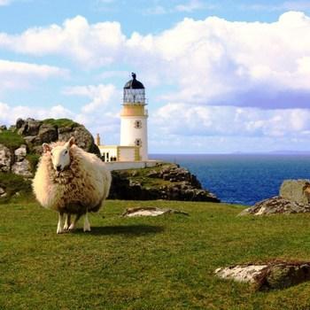 Viande  L'agneau d'Ecosse